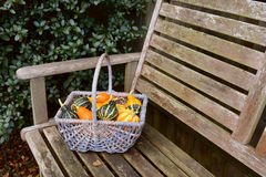 Woven basket full of orange, green and yellow ornamental gourds Stock Photos