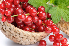 Woven basket with red currant Stock Image