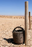 Woven bucket. In the desert in central syria stock images