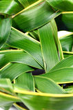 Woven coconut leaves. Stock Photography