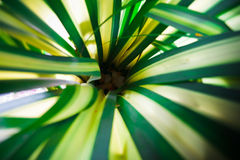 The woven leaves, palm family. Royalty Free Stock Images