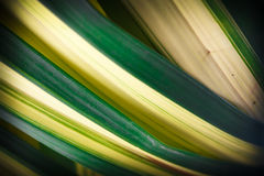 The woven leaves, palm family. Stock Photo