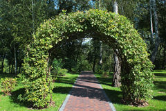 Woven oak branches forming an arch in beautiful garden.  Royalty Free Stock Photos