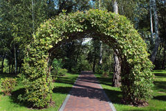 Woven oak branches forming an arch in beautiful garden.  Royalty Free Stock Images