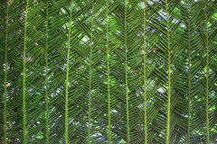 Woven palm leaf as background Royalty Free Stock Photo