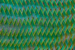 palm leaves woven together Stock Image