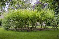 Woven Willow Circle Royalty Free Stock Image