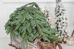 Woven from willow wooden sled with Christmas Tree on a white wall background. copy space.  Royalty Free Stock Photos