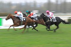Toto CZ company prix - horse racing Royalty Free Stock Photos