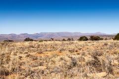 WOW山斑马国家公园的秀丽 免版税库存照片