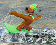 Wow....clever surfing pets Royalty Free Stock Images