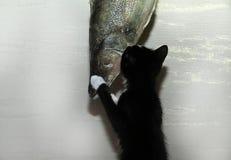 Wow fishing Stock Image