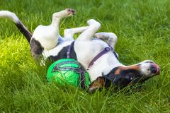 Wow, I feel so good. I feel so good in the green grass in the late summer sun stock photo