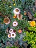 Wow it& x27 s ένα συμπαθητικό λουλούδι στοκ φωτογραφία