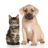 wpólnie kota pies Obrazy Royalty Free