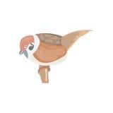 Wróbel, grodzki Wróbli ptak, wektorowa ilustracja, wróbel żyje Fotografia Royalty Free