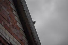 Wróbel na dachu Fotografia Stock