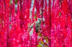 Wróbel w naturalnym przy parkiem Fotografia Royalty Free