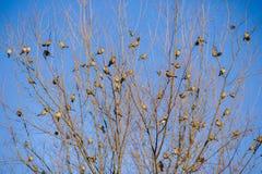 Wróble na drzewie obrazy royalty free