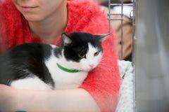 Wręczać out bezdomnych koty fotografia royalty free