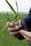 wręcza biurowego pracującego miejsce pracy rolnik tła zarazka ilustracyjny pszeniczny biel Zdjęcie Royalty Free