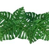 Wręcza malującej akwareli tropikalnego monstera liść bezszwowy wzór Zdjęcie Royalty Free