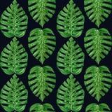 Wręcza malującej akwareli tropikalnego monstera liść bezszwowy wzór Obraz Stock