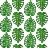Wręcza malującej akwareli tropikalnego monstera liść bezszwowy wzór Obraz Royalty Free
