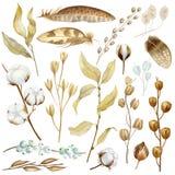 Wręcza malujących akwarela kwiaty, suchych ziarno strąki, bawełnę i gałąź w czecha stylu, Boho nieociosani naturalni elementy dla ilustracja wektor