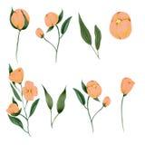 Wręcza malującym wildflowers kolekcję odizolowywającą na białym tle, DIY elementy ilustracji