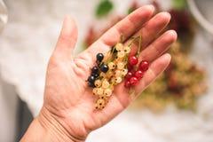 Wręcza mienia czerwieni, białego i czarnego rodzynku jagody, Zdjęcia Stock