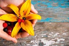Wręcza mienie rodzynki, malinki, agresty, żółty kwiat na drewnianym Zdjęcie Stock