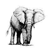 Wręcza patroszoną ilustrację słoń, odizolowywającą na białym tle Zdjęcie Stock