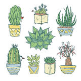 Wręcza patroszoną ilustrację - set śliczny kaktus i sukulenty Fotografia Stock