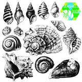 Seashells Fotografia Royalty Free