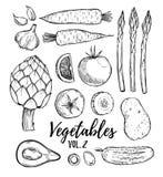 Wręcza patroszoną wektorową ilustrację - kolekcja warzywa vol 2 Obrazy Stock
