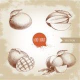 Wręcza patroszone mangowe owoc ustawiać z liśćmi, mango sześciany i plasterki i Nakreślenie stylowa wektorowa owocowa ilustracja Zdjęcie Royalty Free