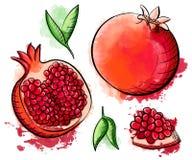 Wręcza patroszonego akwarela obrazu granatowa na białym tle Nakreślenia jedzenia ilustracja Obraz Royalty Free