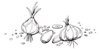 Czosnek ilustraci rysunek Obrazy Stock