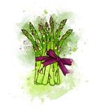 Wręcza patroszonego kolorowego zielonego świeżego asparagus oprawiającego z faborkiem bo Zdjęcia Royalty Free