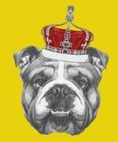 Wręcza patroszonego portret Angielski buldog z koroną ilustracja wektor