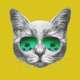 Wręcza patroszonego portret kot z lustrzanymi okularami przeciwsłonecznymi royalty ilustracja