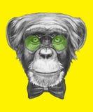 Wręcza patroszonego portret małpa z szkłami i łęku krawatem ilustracji