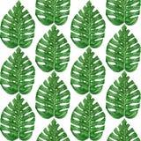 Wręcza patroszonej akwareli tropikalnego monstera liść bezszwowy wzór Obrazy Stock