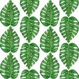 Wręcza patroszonej akwareli tropikalnego monstera liść bezszwowy wzór Obraz Stock