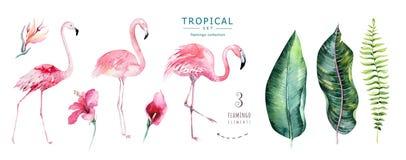Wręcza patroszonej akwareli tropikalnych ptaki ustawiających flaming Egzot różane ptasie ilustracje, dżungli drzewo, Brazil modna royalty ilustracja