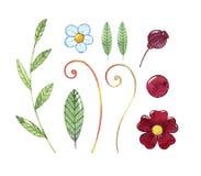 Wręcza patroszonej akwareli ustalonych bajecznie liście i kwiaty Zdjęcie Royalty Free