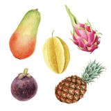 Wręcza patroszonemu brigt kolorową akwarelę ustawiającą tropikalne owoc odizolowywać ilustracja wektor
