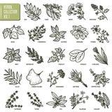 Wręcza patroszony wektorowego ustawiającego ziele i pikantność rocznika ilustracje ilustracja wektor