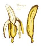 Wręcza rysującego set banany, wektorowa ilustracja Zdjęcie Royalty Free
